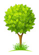 tree with green leaves vector illustration isolated on white