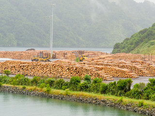 Stockpiled timber ready to be shipped