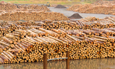 Stockpiled timber ready to be milled to lumber