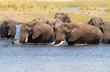 obraz - African Elephants