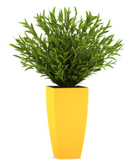 decorative houseplant in yellow pot isolated on white background