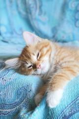 cucciolo di gatto sonnecchia sul divano