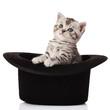 kitten in a hat.