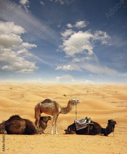 Fototapeten,afrika,sahara,afrikanisch,agressivität