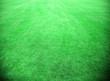 Grüner Fussballrasen