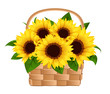 Vector illustration of basket with sunflowers