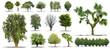 Collection d'arbres isolés sur fond blanc