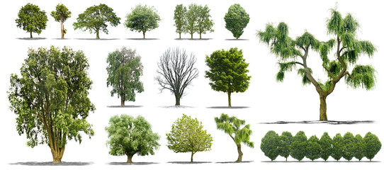 Collection d'arbres isolés sur fond blanc