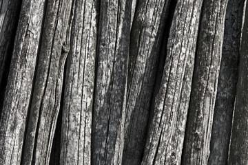 vecchi pali della vigna, tronchi texture
