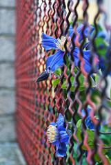 Zaun Blume Draht
