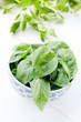 Basil leaves in bowl, close-up