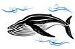 Black whale in ocean water