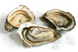 Raw oysters with ice - 42503032