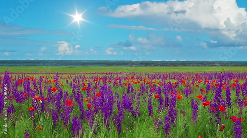 field of spring flowers - the ocean on the horizon