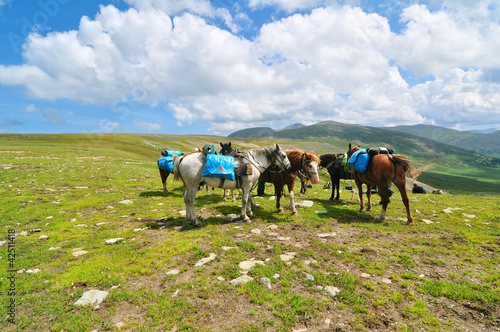 Pack horses in mountains of Altai