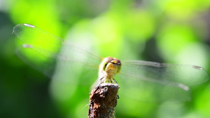 dragonfly in slow motion