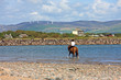 horse rider on Haverigg beach