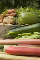Harvest Vegetables