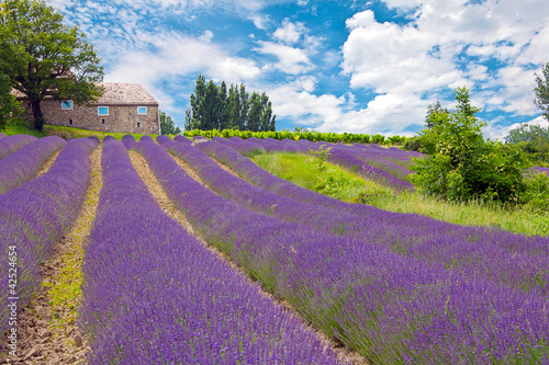 Provence - 42524654