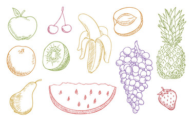 multicolored fruits vector set
