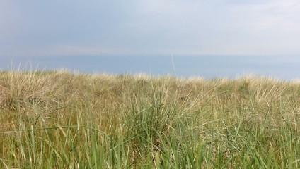 Ostsee Seegras Düne