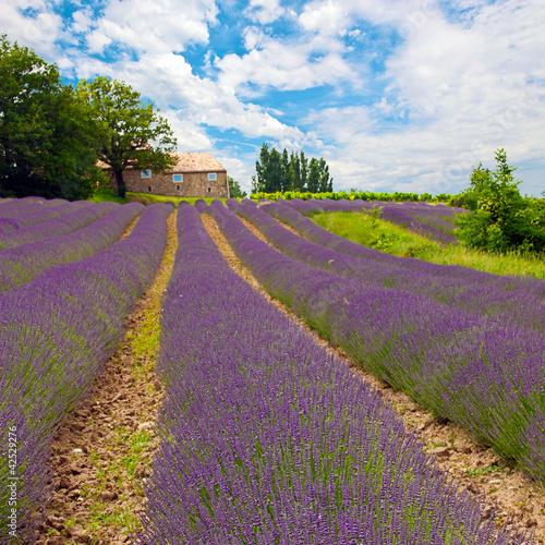 Provence 7 - 42529276