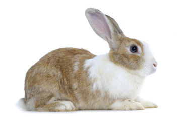 Image of cute rabbit