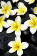 Set of frangipani flower on spa stones