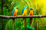 Fototapety Blue-and-Yellow Macaw