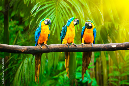 Fotobehang Vogel Blue-and-Yellow Macaw