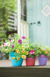 Decorated garden containers and summer flowers