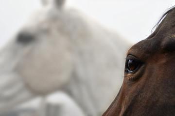 occhio del cavallo 02