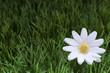 fleure en tissus sur herbe