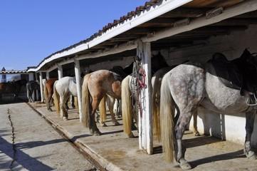Ranch camarguais