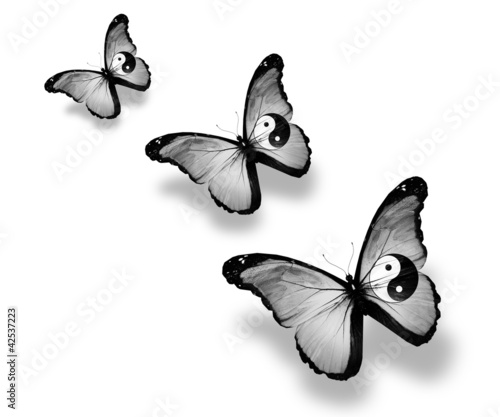 Three dao flag butterflies, isolated on white