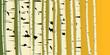 Horizontal illustration of trunks birches.