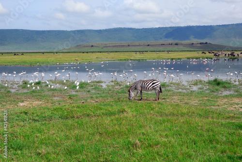 Fotobehang Flamingo Ngorongoro conservation area