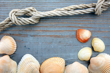 Shells and marine rope on a wooden board