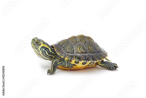 Fotobehang Schildpad turtle