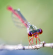 head of the dragon fly