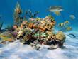 Hard corals in the sea