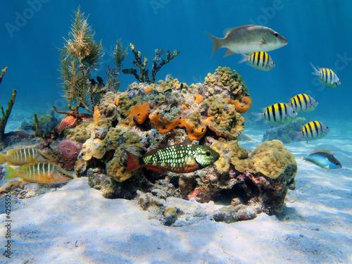 Tuinposter Koraalriffen Hard corals in the sea
