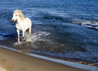 White Horse Splahing