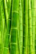 Fototapeten,bambus,biologisch,verzweigt,wald