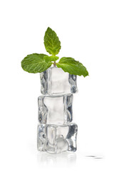 peppermint on ice cubes