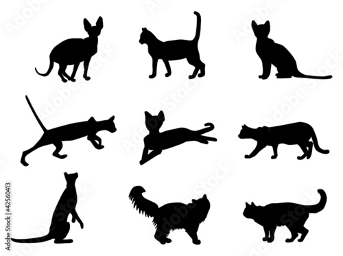 Cats vector silhouettes