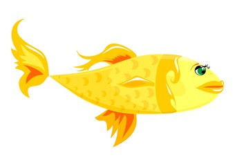 Glamour gold fish with green eyes.