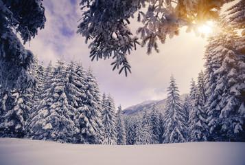 Las w śniegu zima góry