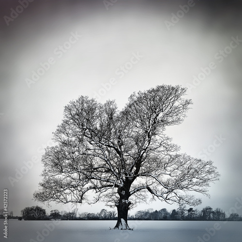 cold bare tree