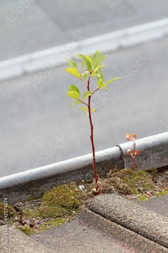Baumtrieb in der Dachrinne